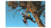 Спил деревьев в Алматы безопасно