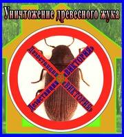 Дезостанция«ВИКТОРИЯ»,  уничтожение древесного жука (короеда) в Алматы.