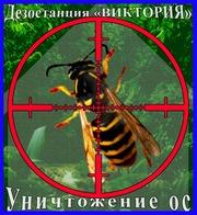 Дезостанция«ВИКТОРИЯ»,  уничтожение ос в Алматы и области.