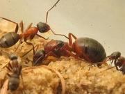 уничтожение муравьев в Алматы