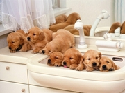 Моющее средство  для устранения запахов при содержании  животных.