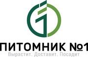 Саженцы жимолости (ЗКС).