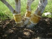 Садовый клей в Алматы для ловчих поясов. Клей для ловли грызунов.