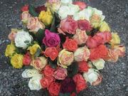 51 роза цветной микс