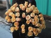 Букет 51 кремовая роза 50 см