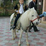 конь белый