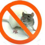 Борьба,  уничтожение крыс