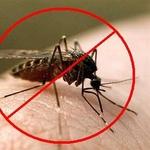Борьба. Уничтожение комаров в Алматы и Алматинской области