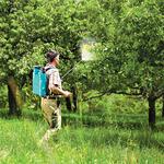 Весенняя противогрибковая обработка плодовых деревьев в Алматы