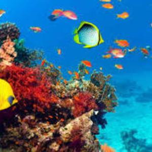 сервисное обслуживание морских и пресноводных аквариумов