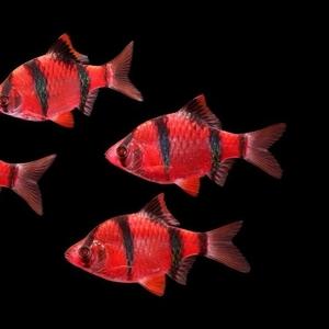 рыбки с доставкой по Алматы