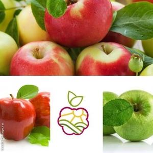 Саженцы яблонь в Алматы оптом и в розницу.