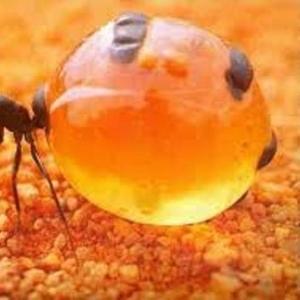 Борьба и уничтожение муравьев в Алматы и Алматинской области