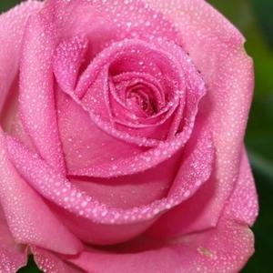 Объемный флористический лак-спрей с эффектом имитации росы