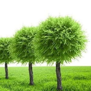 Благоустройство и Озеленение (посадка,  уход,  полив,  контроль)
