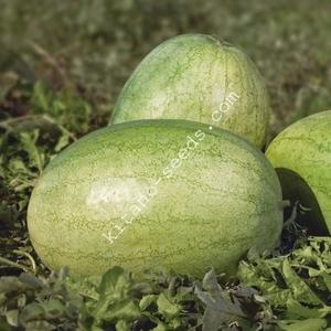 Семена арбуза KS 1819 F1,  KITANO SEEDS