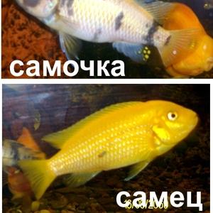 Рыбки,  декорации
