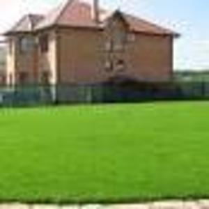 Семена газонных трав DLF-Trifolium