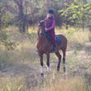 ОБУЧЕНИЕ ВЕРХОВОЙ ЕЗДЕ, прокат лошадей