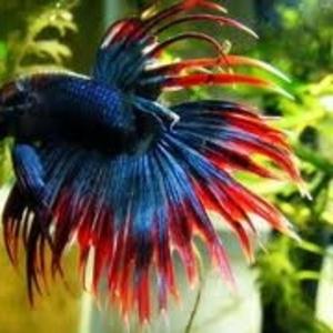 продажа аквариумных рыбок собственного разведения(КАЖДАЯ 10 РЫБКА БЕСПЛАТНО!)