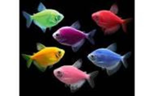 рыбки с доставкой по Алматы 4