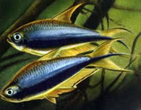 рыбки с доставкой по Алматы 6