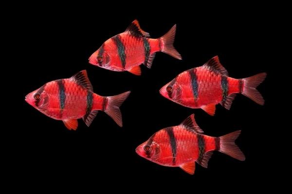 флуаресцентные светящиеся рыбки(каждая 10 бесплатно)  5