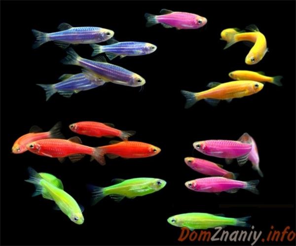 флуаресцентные светящиеся рыбки(каждая 10 бесплатно)  7