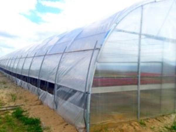 Промышленная/фермерская теплица Oriente RUS  2