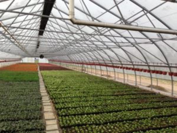 Промышленная/фермерская теплица Oriente RUS  4