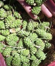 Лекарственные травы , растительное сырье